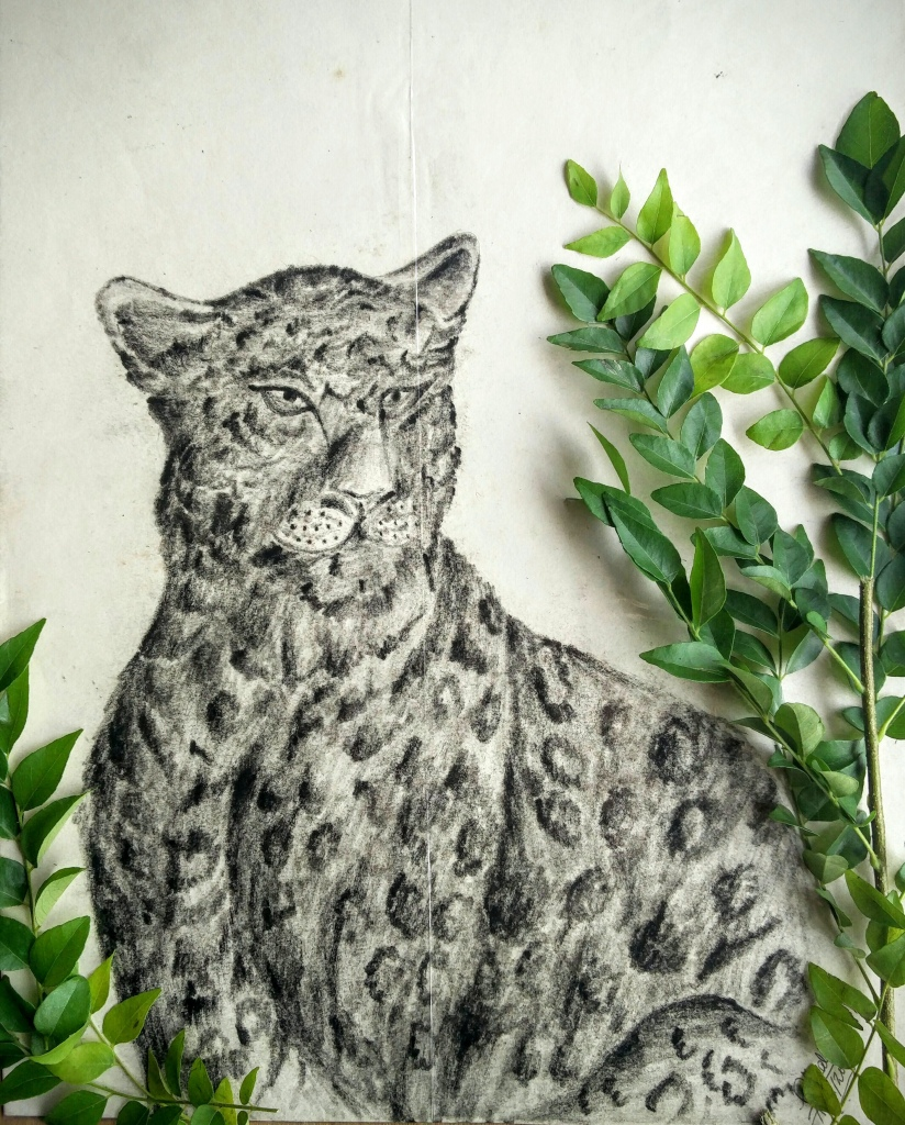 Charcoal Sketch Cheetah